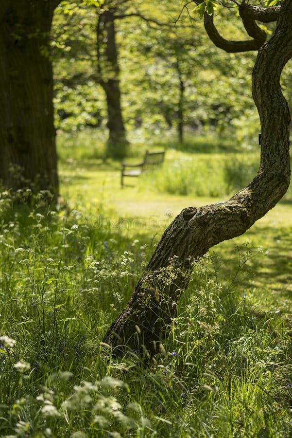Mooie ondiepe diepte van gebieds vers landschap van Engels bos stock afbeelding