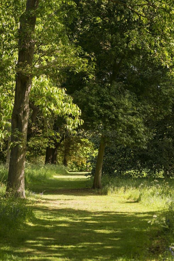 Mooie ondiepe diepte van gebieds vers landschap van Engels bos royalty-vrije stock afbeelding