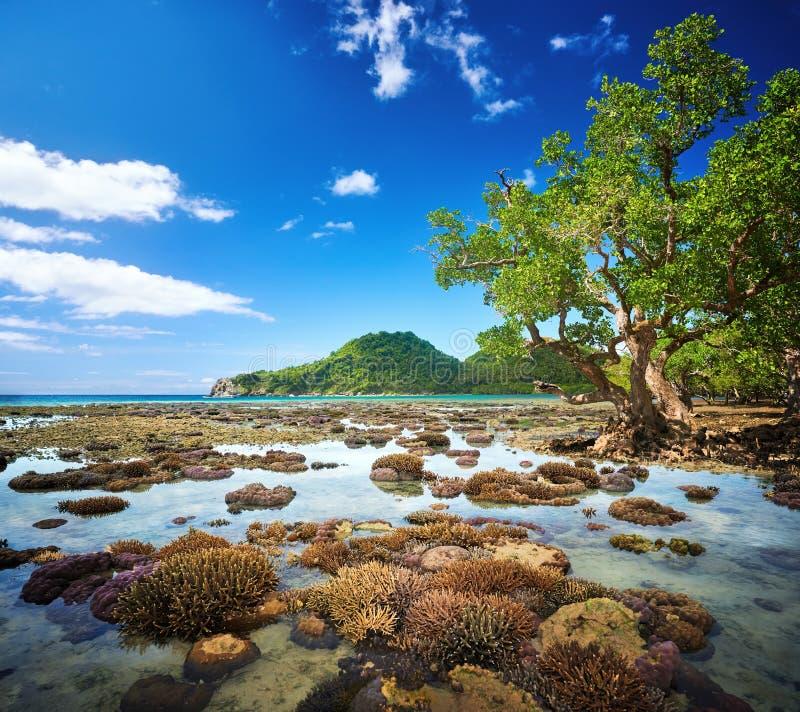 Mooie ondiepe overzees met koraalrif en groen eiland op ho stock fotografie