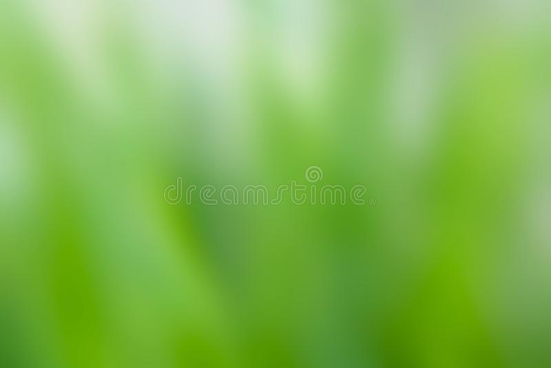 Mooie Onscherpe witte en groene aard voor achtergrond en textuur stock foto