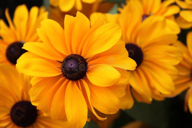 Mooie oranje bloemen royalty-vrije stock fotografie