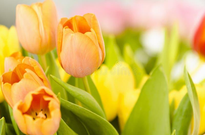 Download Mooie oranje tulpen. stock foto. Afbeelding bestaande uit sensueel - 29509234