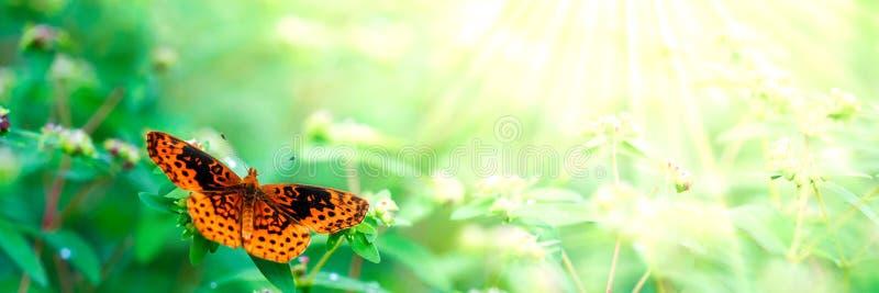 Mooie oranje vlinder royalty-vrije stock fotografie