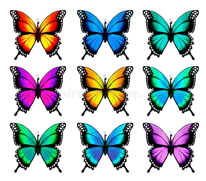 Mooie oranje vlinder in verschillende posities stock illustratie