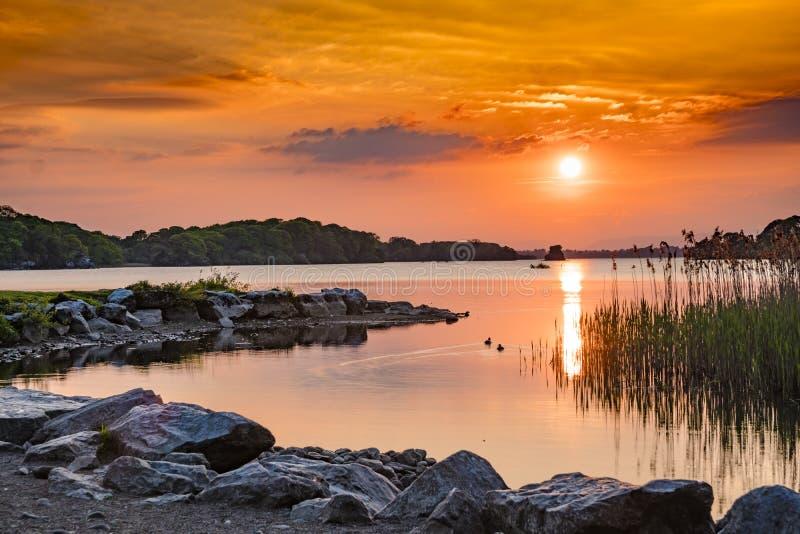 Mooie oranje zonsondergang over een meer met eenden en riet gouden uur stock afbeeldingen