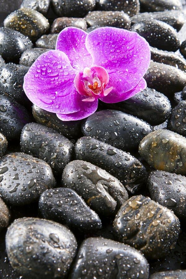 Mooie orchideeën, zwarte stenen, dalingen van water  stock foto