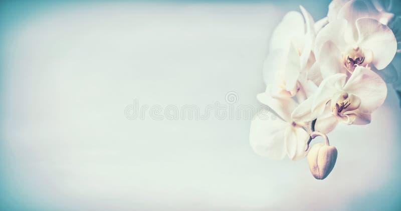 Mooie orchideeënbloemen bij blauwe pastelkleurachtergrond, exemplaarruimte royalty-vrije stock fotografie