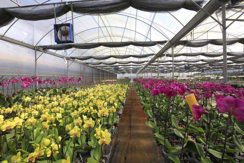 Mooie orchideebloemen in orchideelandbouwbedrijf royalty-vrije stock afbeeldingen
