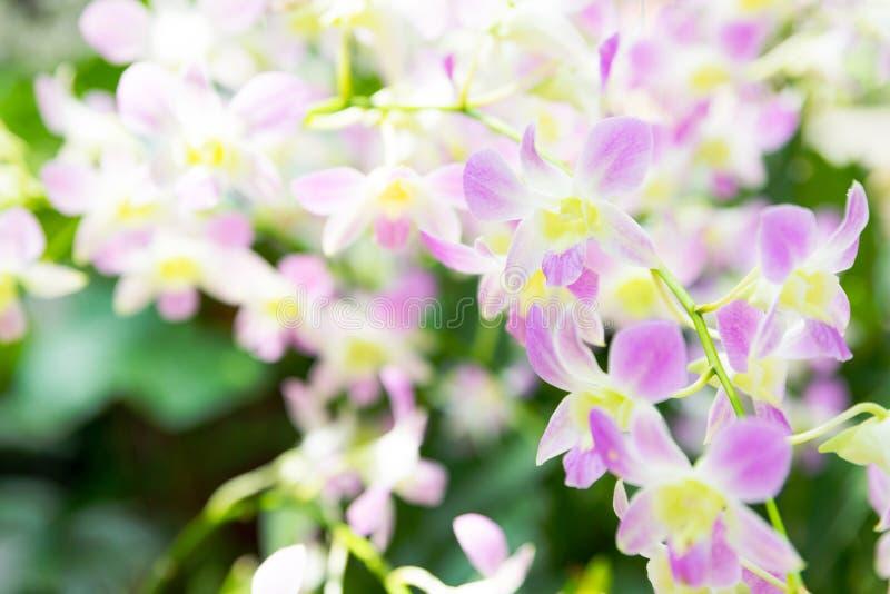 Mooie orchideebloemen in tuin royalty-vrije stock foto