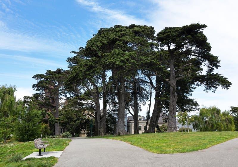 Mooie oude cipressen op Alamo Vierkant park in San Francisco royalty-vrije stock foto's