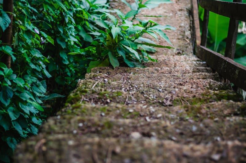 Mooie Oude Rotsachtige stappen - onderaan een bos royalty-vrije stock foto