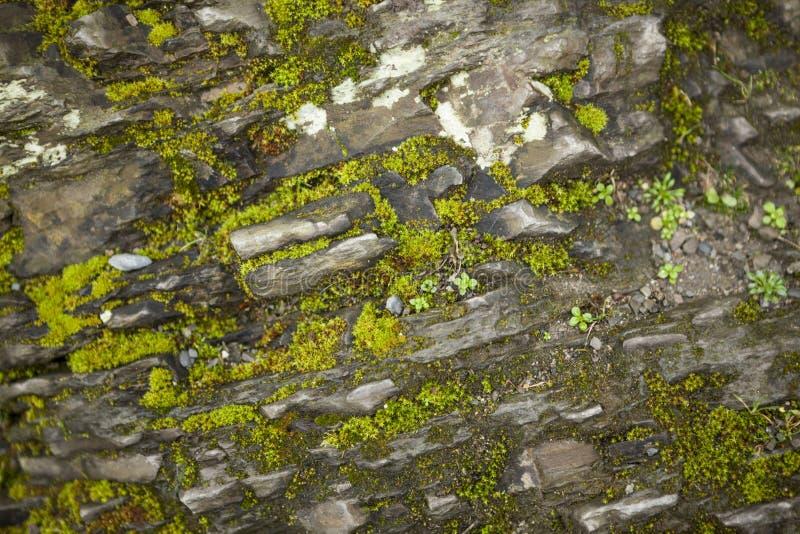 Mooie oude steenmuur met groene mosachtergrond royalty-vrije stock foto