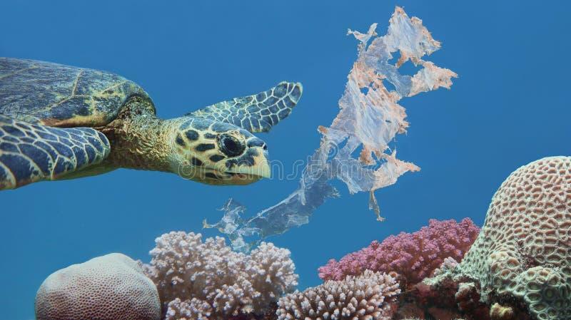Mooie overzeese hawksbill schildpad die boven kleurrijk tropisch die koraalrif zwemmen met plastic zak wordt verontreinigd stock afbeelding