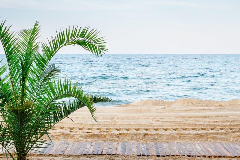 Mooie overzeese mening met palm, zandstrand en promenade Geen mensen stock foto