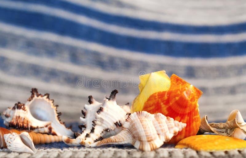 Mooie overzeese shells op een achtergrond van turkooise golven stock foto
