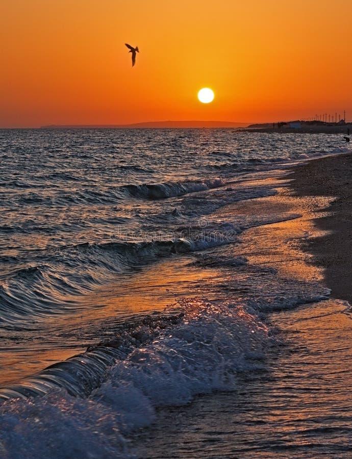 Mooie overzeese zonsondergang met het breken van golven op een zandige overzeese kust en een vliegende zeemeeuw Een toneellandsch royalty-vrije stock fotografie