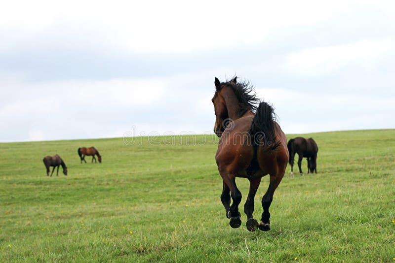 Mooie paarden stock foto's