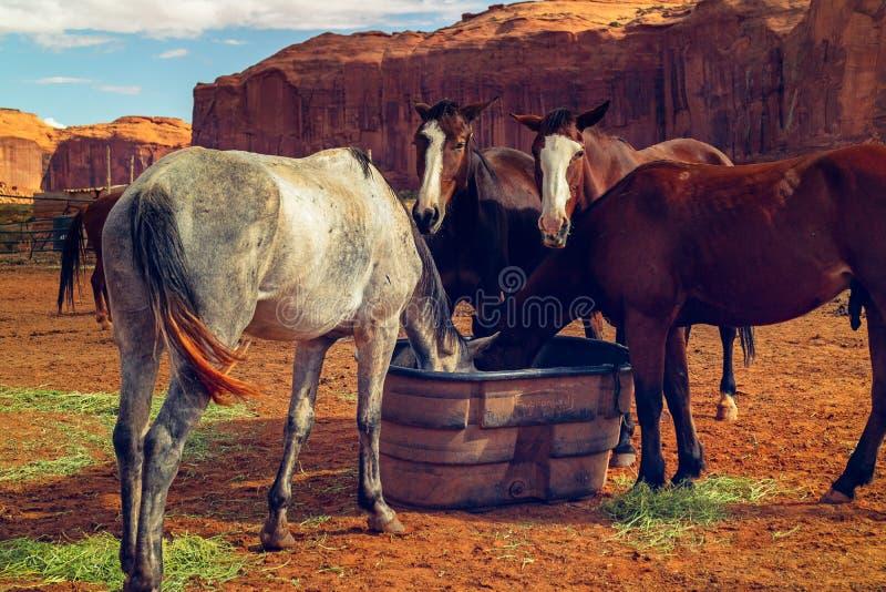 Mooie Paarden en Rode Rotsen, Monumentenvallei, Utah stock foto