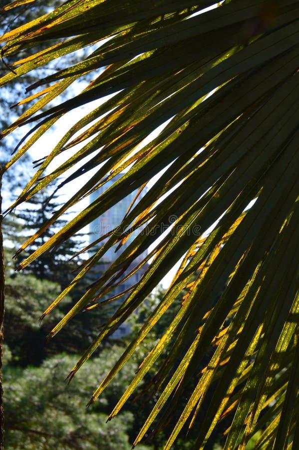 Mooie palm in de keerkringen op een achtergrond van zonlicht stock afbeelding