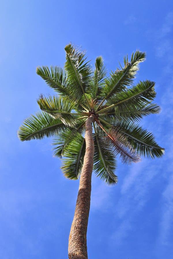 Mooie palmen bij het strand op de paradijseilanden Seychellen stock fotografie