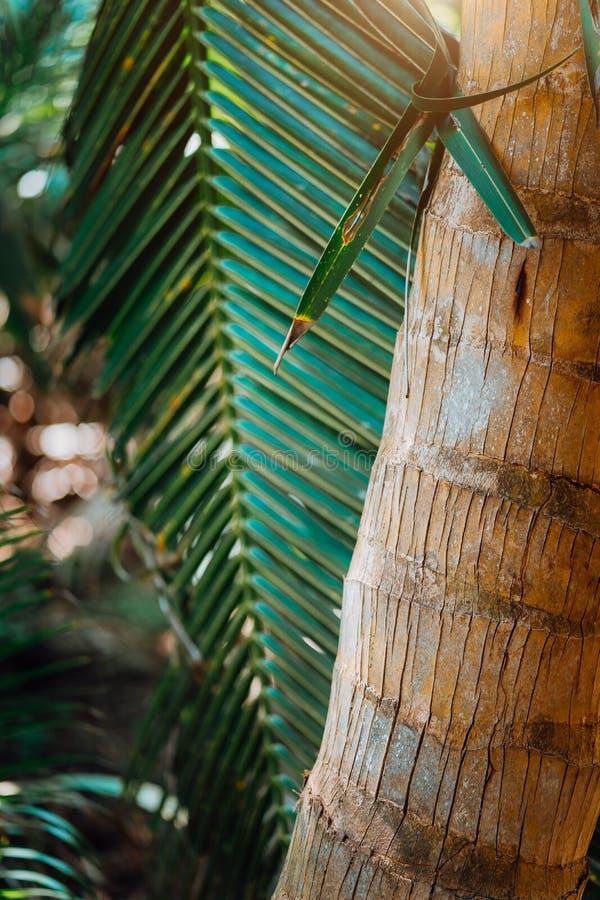 Mooie palmen bij het strand op de paradijseilanden Seychellen stock foto's