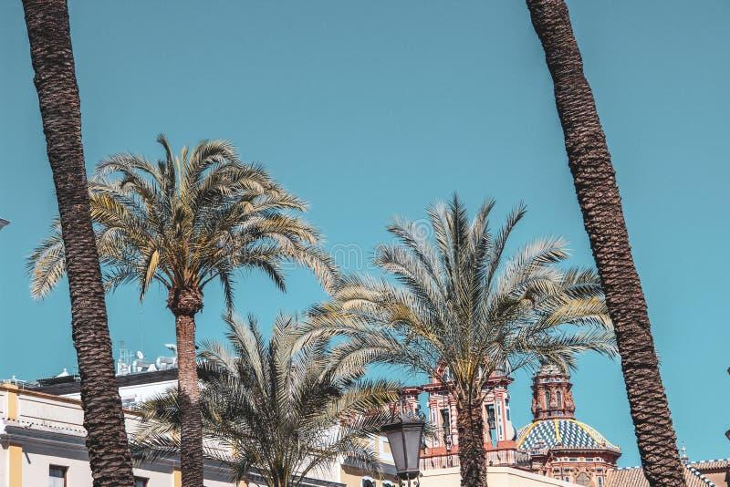 Mooie palmen in duidelijke blauwe hemel stock afbeeldingen