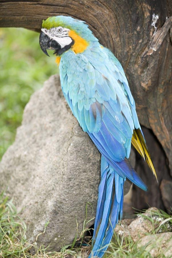 Mooie papegaai stock foto's