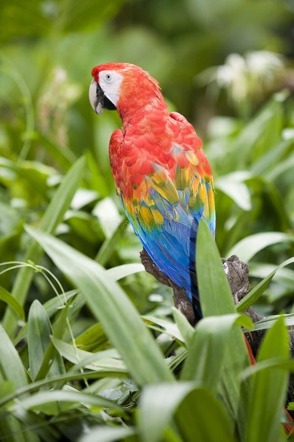 Mooie papegaai royalty-vrije stock fotografie