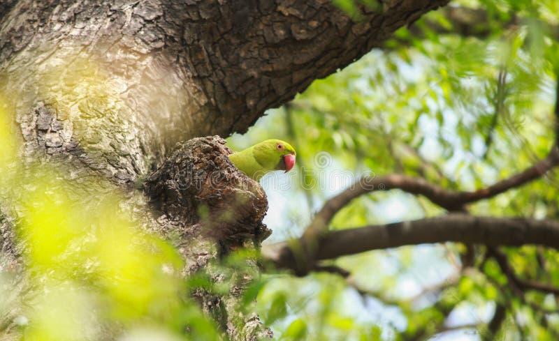 Mooie papegaaien op een boom stock fotografie