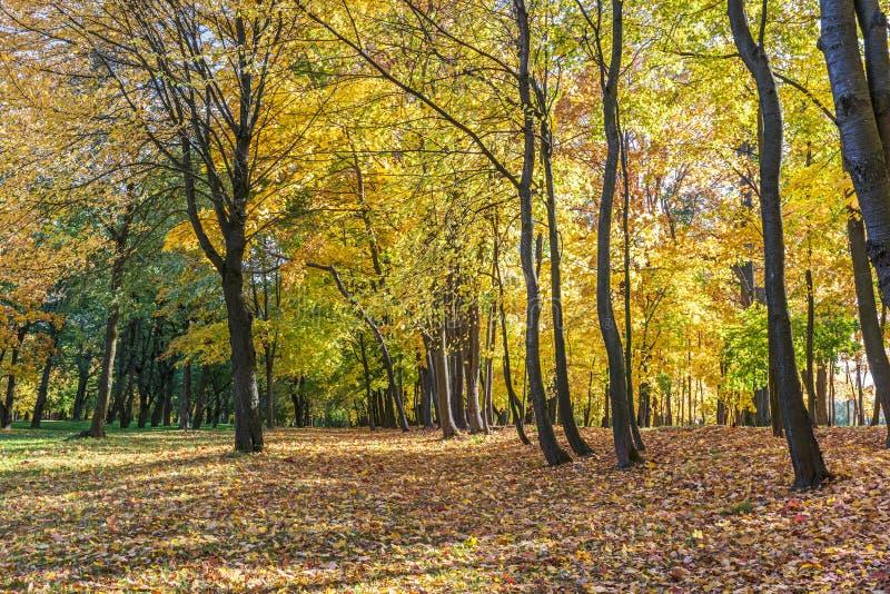 Mooie parkbomen met helder gouden en rood gebladerte in de herfst tijdens zonnige dag stock afbeelding