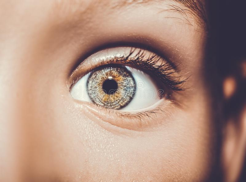 Mooie pienter kijkt oog Sluit omhoog geschoten stock afbeelding