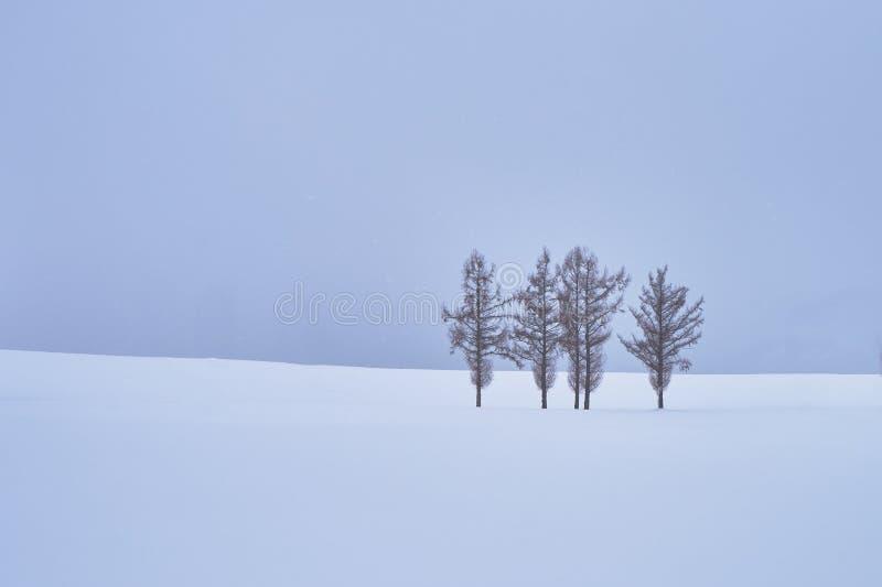 Mooie Pijnboombomen bij 'Milde zeven heuvels langs de lapwerkweg in de winter bij Biei-stad stock afbeeldingen
