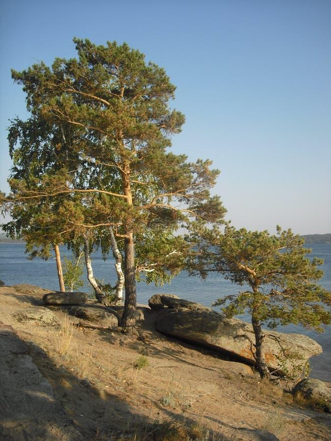 Mooie pijnboombomen op de kusten van blauw meer stock afbeelding