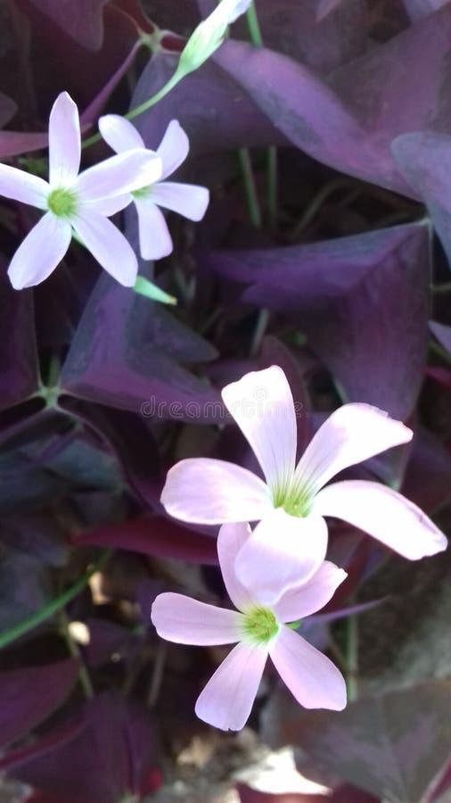 Mooie pinkbloem royalty-vrije stock afbeelding