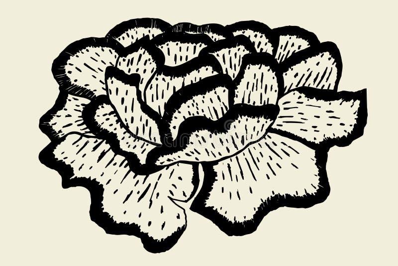 Mooie pioenbloem stock illustratie