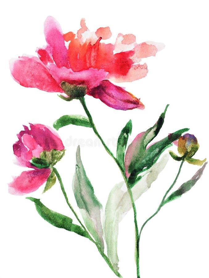 Mooie pioenbloemen stock illustratie