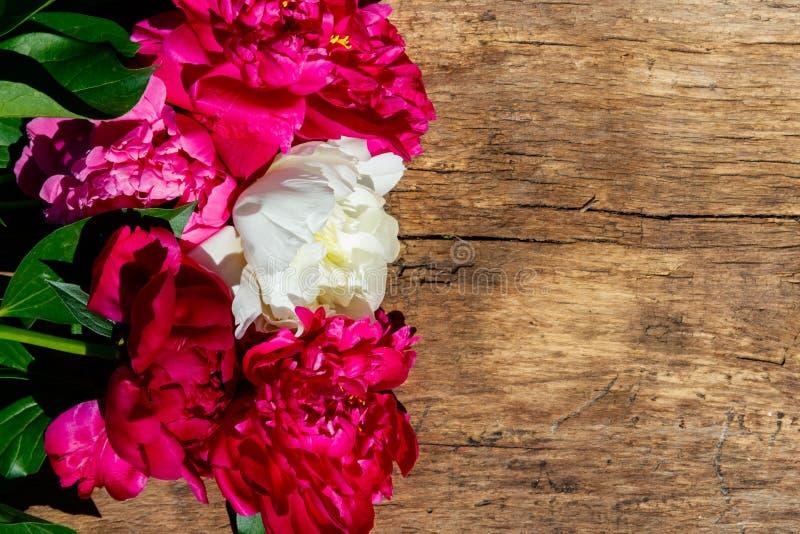 Mooie pioenbloemen op rustieke houten achtergrond Hoogste mening, exemplaarruimte stock fotografie