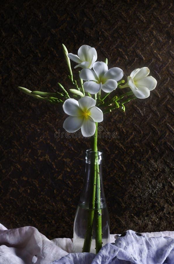 Mooie plumeriabloem Stilleven 1 royalty-vrije stock afbeeldingen