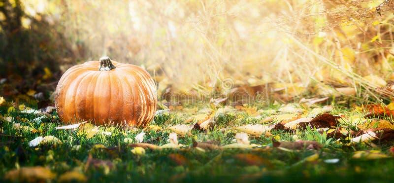 Mooie pompoen over dalingslandschap met gazon, bomen en gebladerte De herfst het oogsten aardconcept royalty-vrije stock afbeeldingen