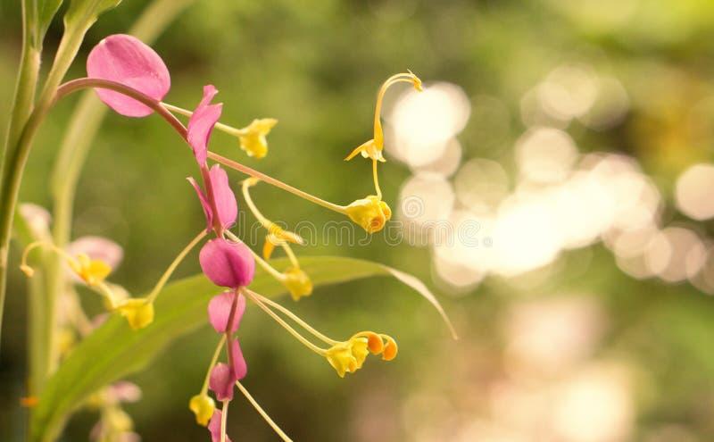 Mooie purpere bloem met lichtgele bokehachtergrond royalty-vrije stock afbeeldingen