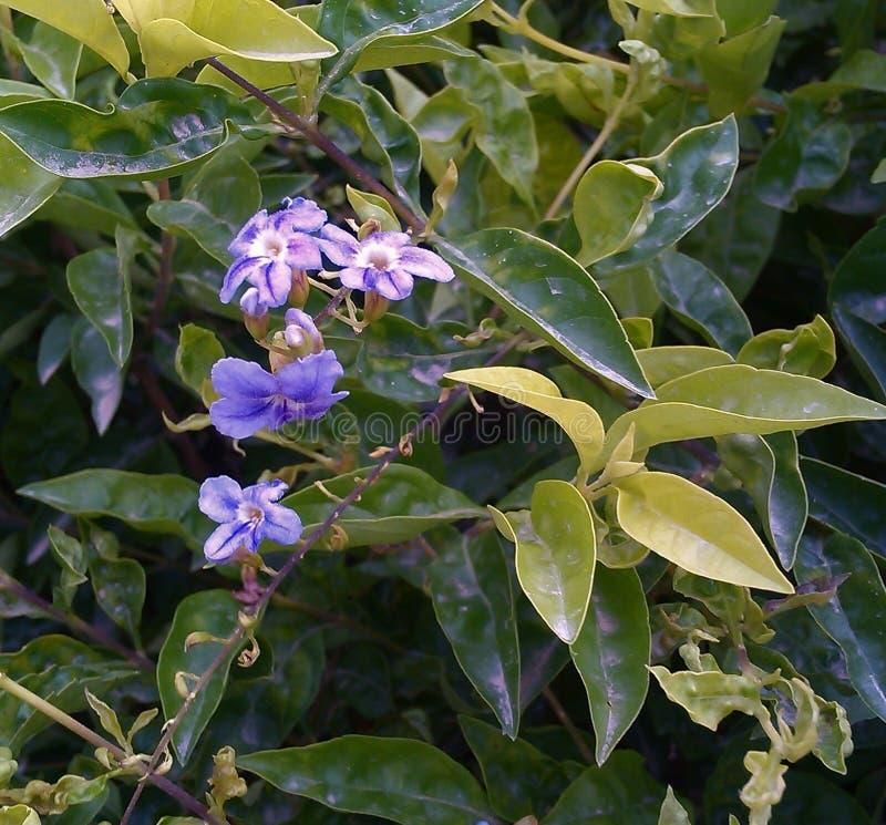 Mooie purpere bloemen royalty-vrije stock fotografie