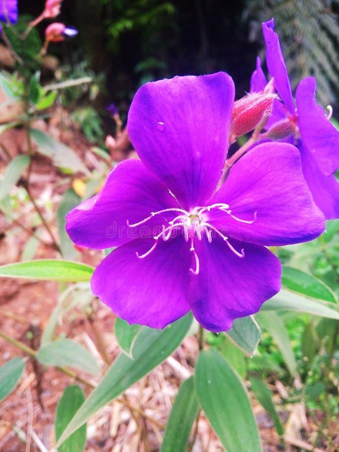 Mooie purpere bloemen in de zon stock foto