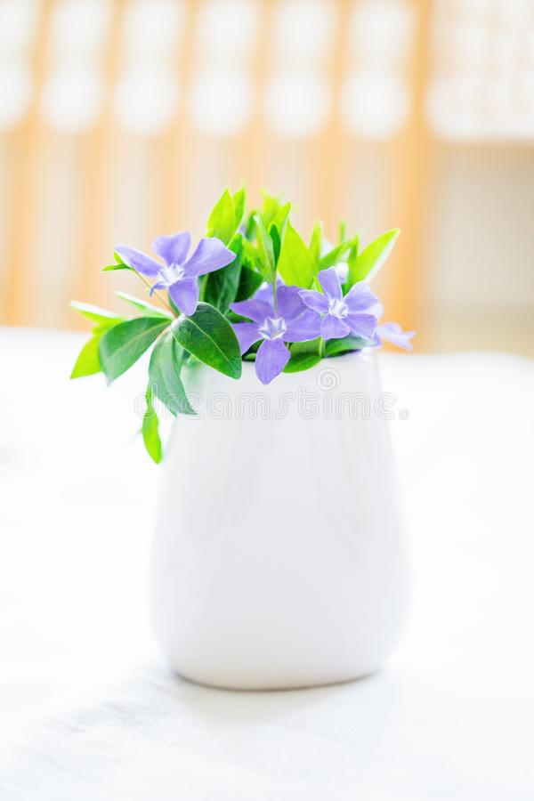 Mooie purpere bloemenmaagdenpalm in een witte vaas op een lichte achtergrond royalty-vrije stock foto
