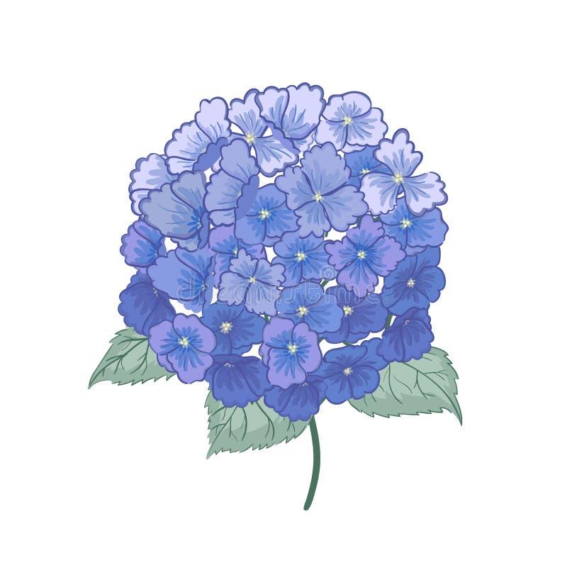 Mooie purpere die hydrangea hortensiabloem op witte achtergrond wordt geïsoleerd stock illustratie