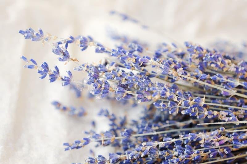 Mooie purpere lavendel op een witte achtergrond stock foto