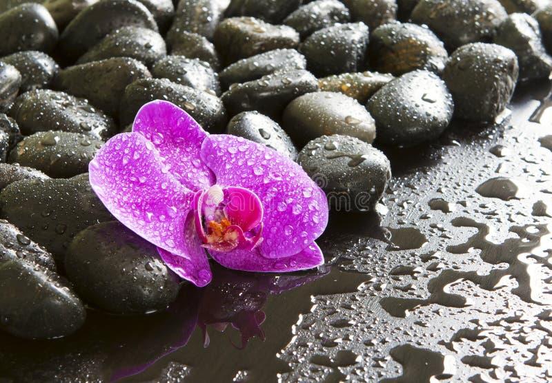 Mooie purpere orchidee, rotsen en waterdruppeltjes. royalty-vrije stock afbeeldingen