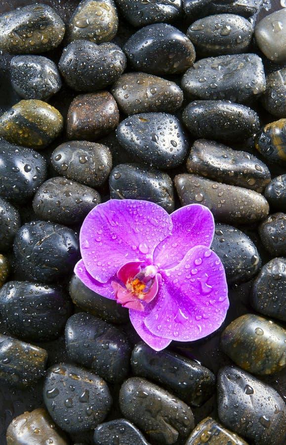 Mooie purpere orchidee, rotsen en waterdruppeltjes. stock fotografie