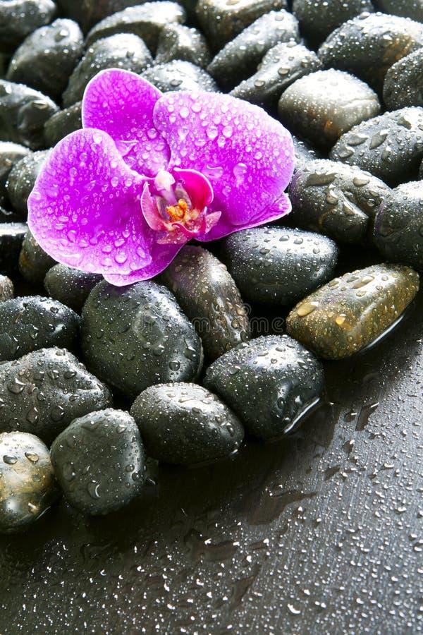 Mooie purpere orchidee, rotsen en waterdruppeltjes. stock foto