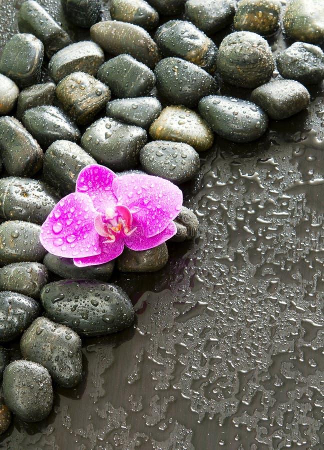 Mooie purpere orchidee, rotsen en waterdruppeltjes. royalty-vrije stock fotografie