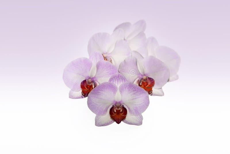 Mooie purpere orchideebloem royalty-vrije stock afbeeldingen